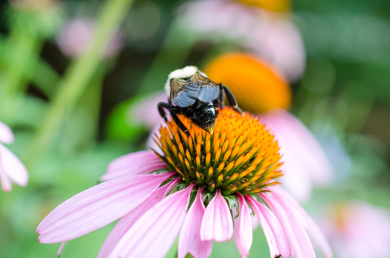 Bee Still | Quirk'n It