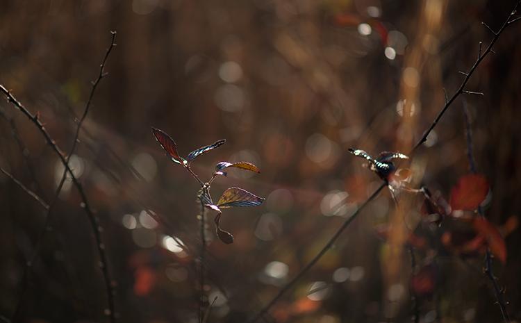 Nikon D800; AF-S Micro Nikkor 105mm 2.8G, Nikon D800, nature, landscape, abstract, photography