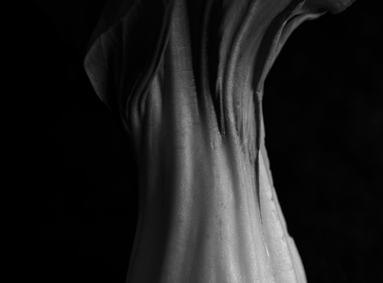 Nikon D800, Nikkor Micro 60mm 2.8, still life, black and white, photography