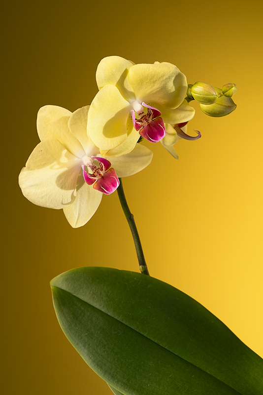 0orchid1